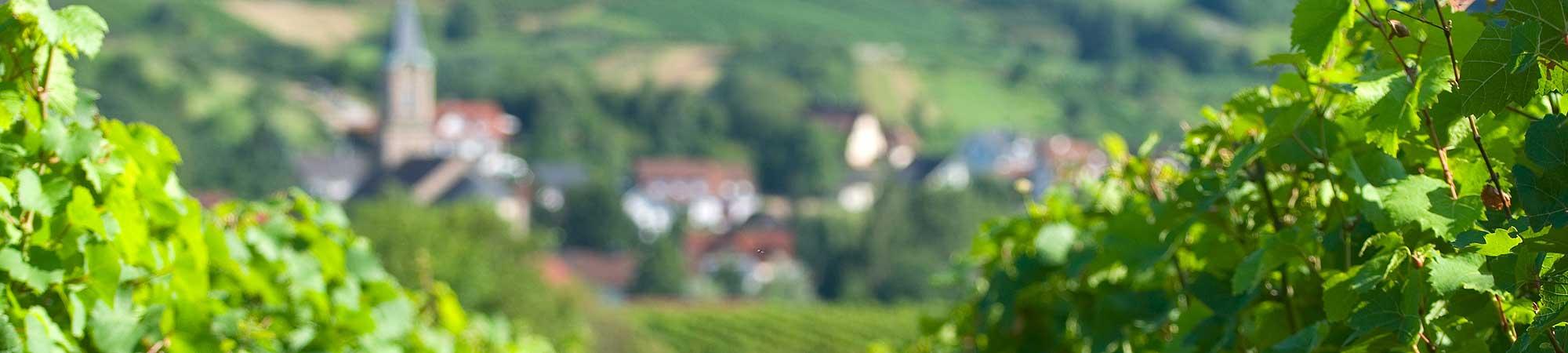 Rebland-Immobilien-Baden-Buehl